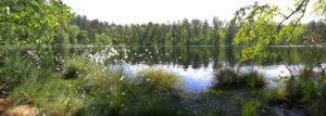 Waldbaden - Leśna panorama nad jeziorem